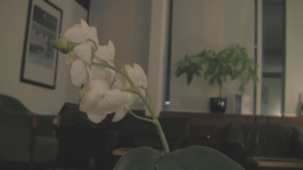Flowers at Luxx Lounge - FRA