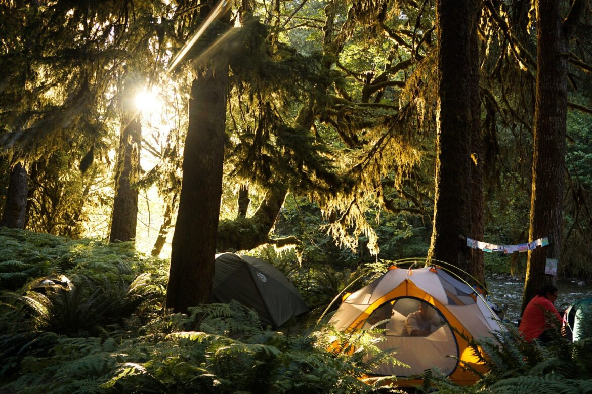 Natural light in Olympic National Park